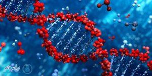 واکنشهای زنجیرهای پلیمراز (PCR)، انواع و کاربردهای PCR