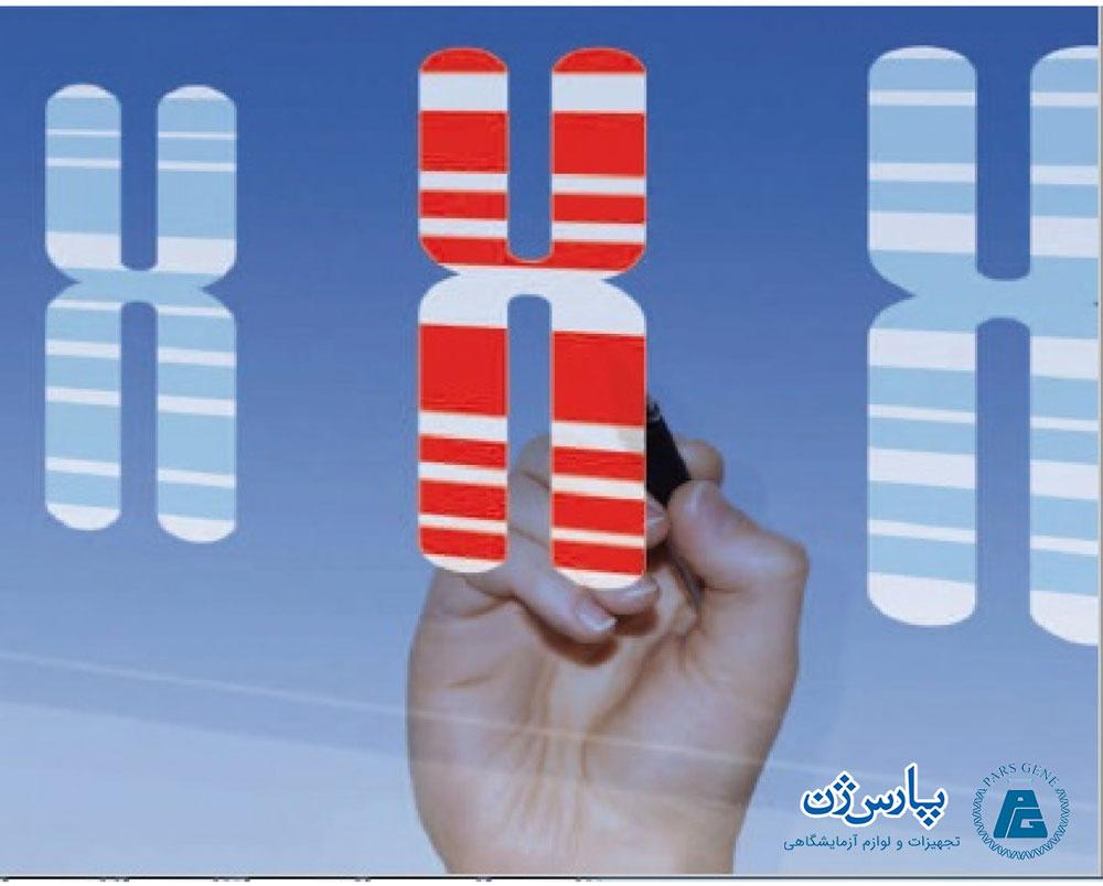 سیتوژنتیک و الگوهای باندینگ DNA