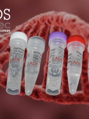 محلول Optimase Polymerase با dNTPs